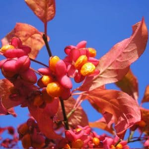 Spindle hedging
